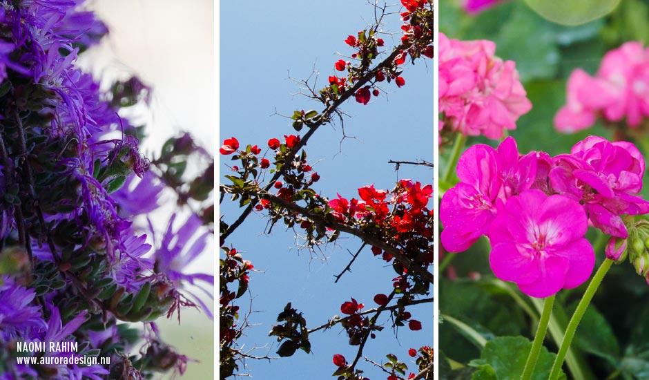 capri-gardens-augustus