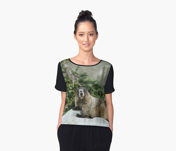 It's a Hoary Marmot! Top